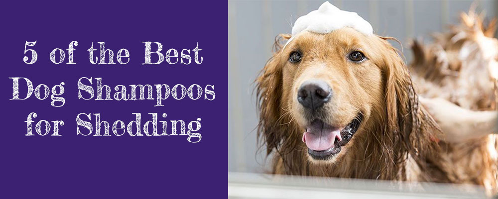 Best dog shampoo for shedding