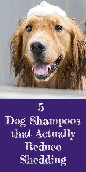 Best Vacuum for Pet Hair 2017