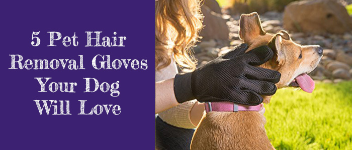 Best Pet Hair Removal Glove